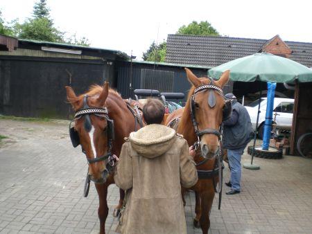 Kutschfahrt Wietzetze 2008 Pferde anspannen Zweispänner