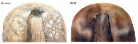 Pferdefarbe Rappen Schimmel Haarfarbe Pferde