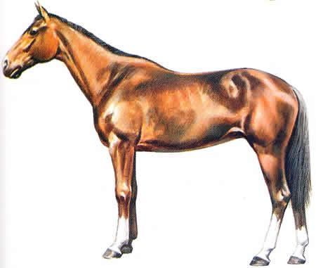 Salerner Pferderassen Italienische Pferdezucht Warmblüter Vollblüter