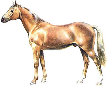 Pferderassen Selle Francais Französische Pferdezucht Warmblüter
