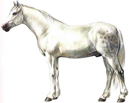 Pferderassen Orlowtraber Russische Pferdezucht Warmblüter