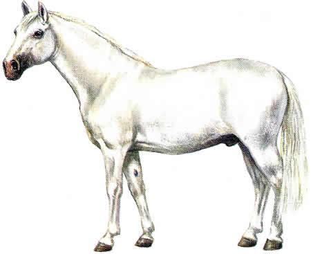 Pferderassen, Lipizzaner, Russische Pferdezucht, Warmblüter