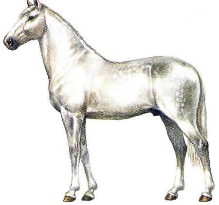 Pferderassen Lusitano Warmblüter Iberische Pferdezucht