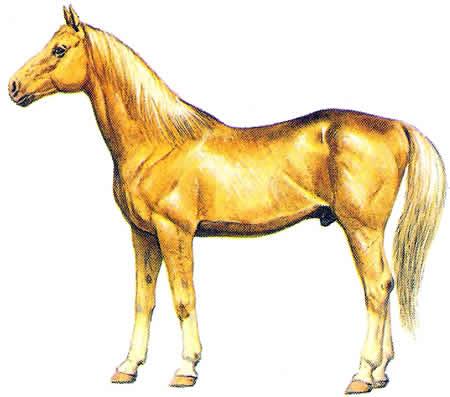 Pferderassen Achal-Tekkiner Warmblüter Russische Pferdezucht