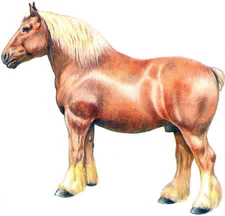 Pferderassen Ardenner Kaltblüter Französische Pferdezucht