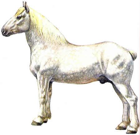Pferderassen Boulonnais Kaltblüter Französische Pferdezucht