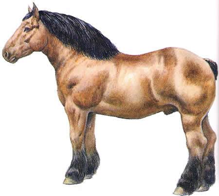 Pferderassen Bretone Kaltblüter Französische Pferdezucht