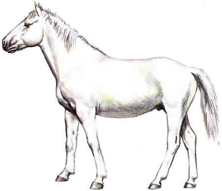 Pferderassen Camarguepferd Warmblüter Französische Pferdezucht