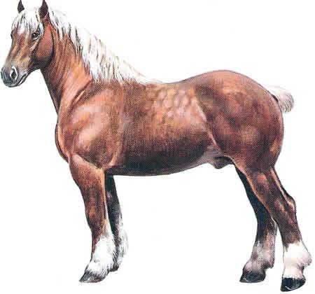Pferderassen Comtois Französische Pferdezucht Kaltblüter