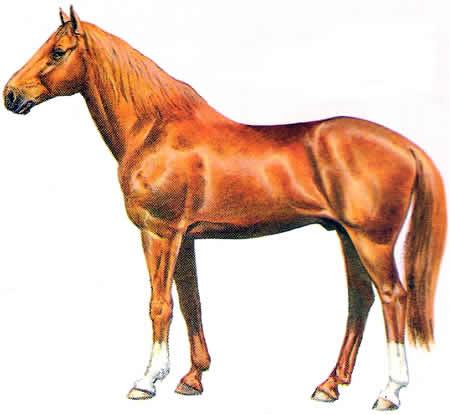 Pferderassen Donpferd Russische Pferdezucht Warmblüter