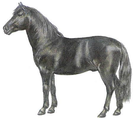 Pferderassen Ponyrassen Dülmener Dülmener Wildpferd Deutsche Pferdezucht
