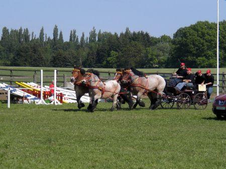 Turnier Wietzetze 2009 Kaltblutkutsche Hitzacker trabt voran Pferdeleistungsschau PSV Hitzacker Shownummer