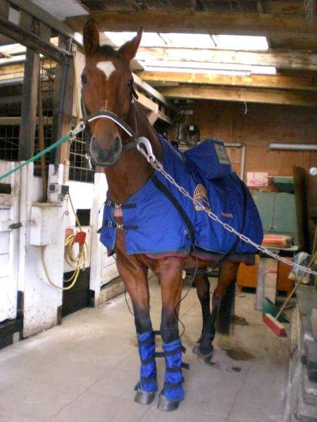 Pferdekrankheiten, Arthrose Vita-Life Lahmheit Entzündung Knochenverschleiß Ingwer Magnetresonanztherapie Luvex Cortison Gelenkflüssigkeit Chronische Gelenkerkrankung