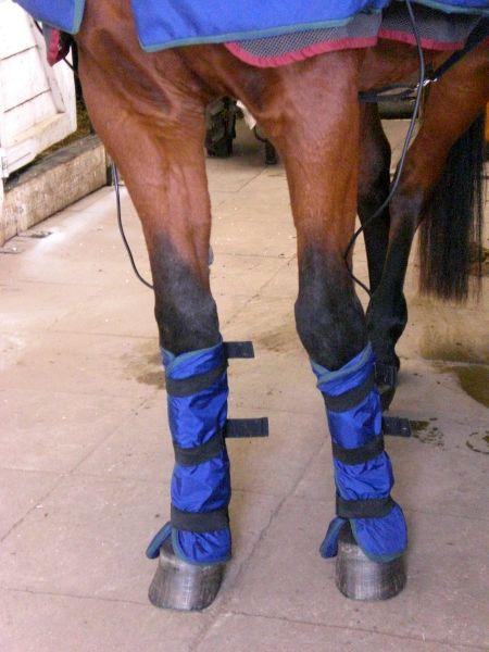 Pferdekrankheiten Arthrose Lahmheit Entzündung Knochenverschleiß Magnetresonanztherapie Luvex Gelenkflüssigkeit Chronische Gelenkerkrankung