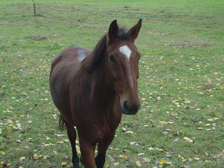 Gebet eines Pferdes Pferdegebet Pferdeweide Eskyld