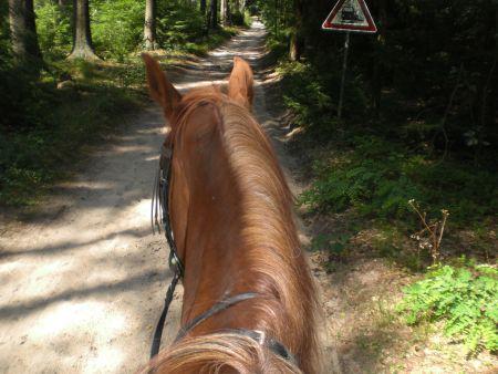 Ausritt Escada Wald Vertrauen Ruhe Geduld Pferde