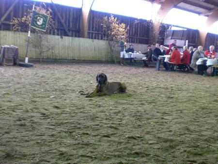 Fuchsjagd 2010, Hund auf Präsentierteller